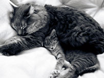 cat maternal care